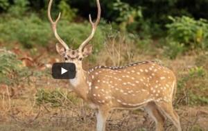 A sampling of wildlife in Sri Lanka