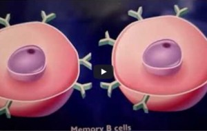 Our Immune system and the workings explained-by Dr Harold Gunatillake